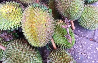 Fod Travel Zanzibar Exotic Fruit