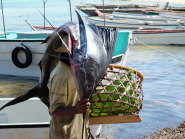 Food Travel Zanzibar man in Kizimkazi having a big fish on his head