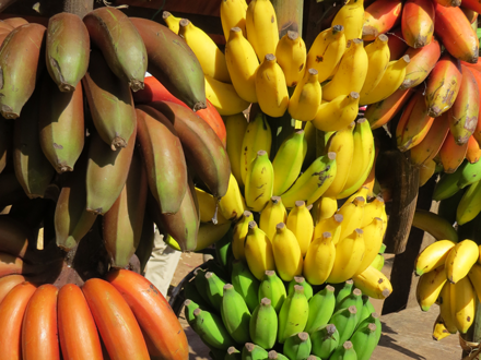 Bananas in various colors and shapes