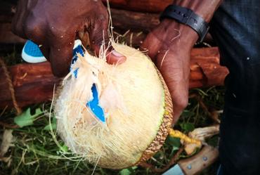 Peeling of a Zanzibar coconut
